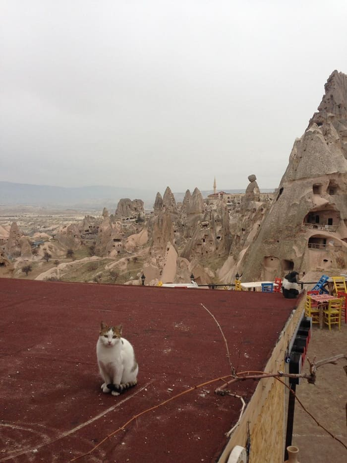 turkish cat in cappadocia