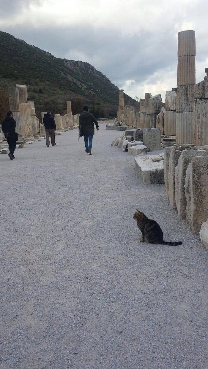 turkish cat in ephesus