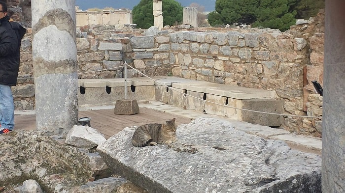 turkish cat in ephesus
