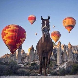 カッパドキアの馬