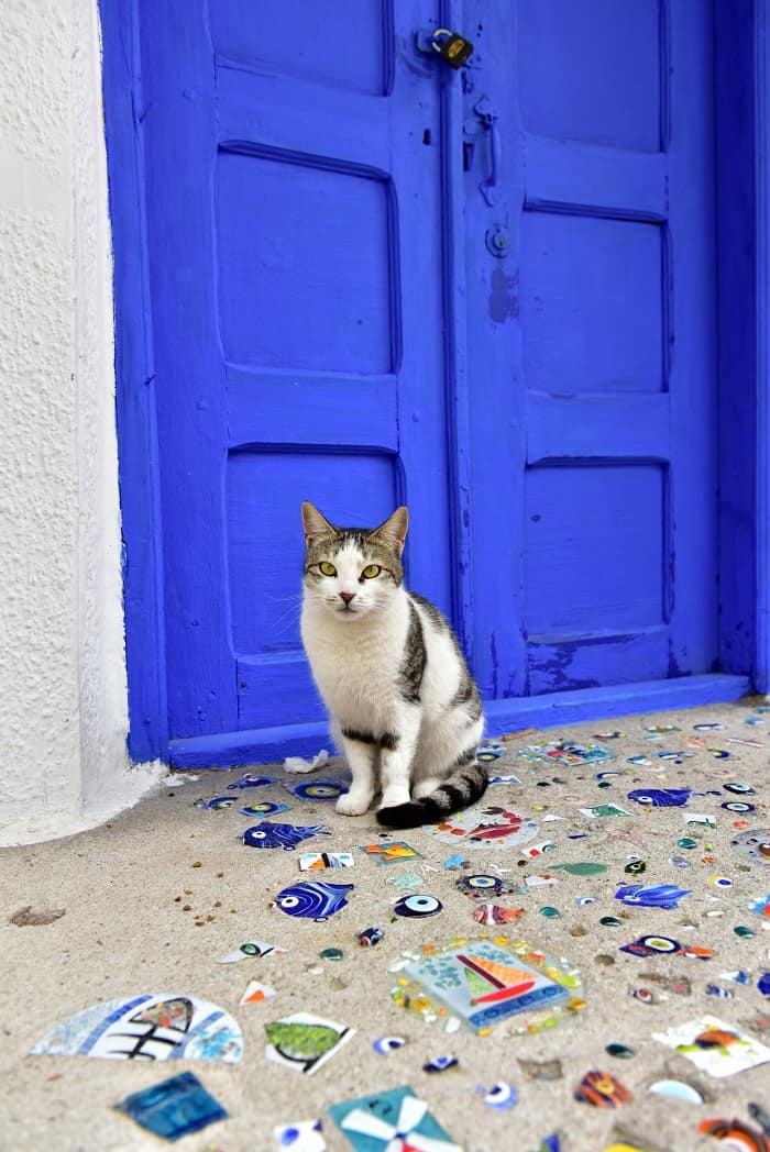 turkish cat in pergamon